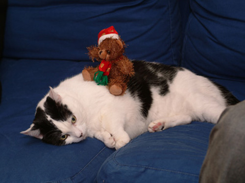 "A candidate for ""Stuff on my Cat"" if ever I saw one. Daisy didn't really enter into the Christmas spirit this year..."