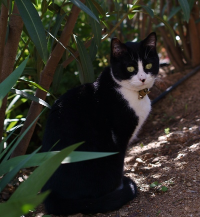 Minouche watches everything from the garden